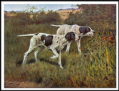 Pointer Dogs Lovely Image Vintage Style Dog Print Poster