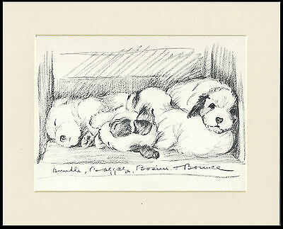SEALYHAM TERRIER PUPS 1930'S DOG ART PRINT by MAC LUCY DAWSON READY MOUNTED