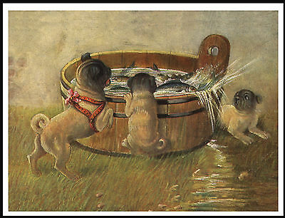Pug Dogs And Fish In A Tub Lovely Dog Print Poster