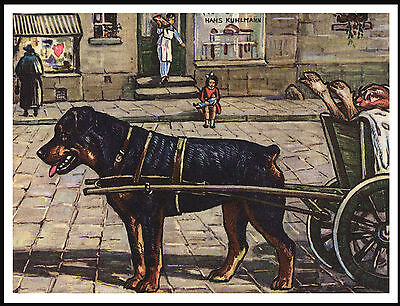 Rottweiler Harnessed To Butchers Cart Lovely Vintage Style Dog Art Print Poster