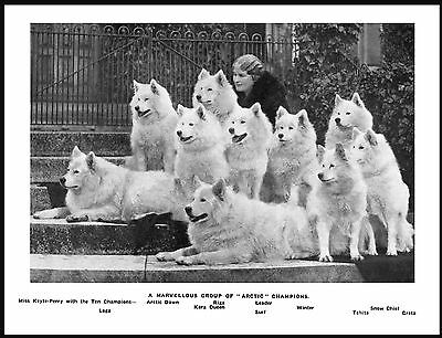 Lady And Her Named Samoyed Dogs Lovely Vintage Style Image Dog Print Poster