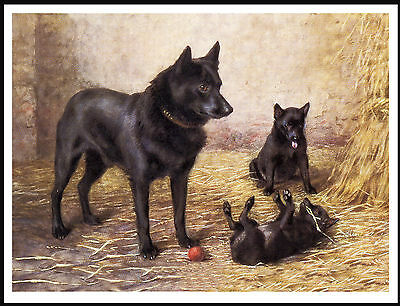 Schipperke Mother And Puppies Charming Vintage Style Dog Art Print Poster