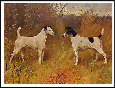 Smooth Fox Terrier Dogs Lovely Image Old Style Dog Art Print Poster