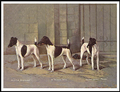 Smooth Fox Terrier Three Named Dogs Lovely Vintage Style Dog Art Print Poster