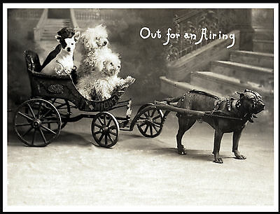 Staffordshire Bull Terrier Pulling Cart Lovely Old Style Image Dog Print Poster