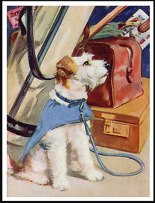 Jack Russell Wire Fox Terrier Waits With Luggage Lovely Image Dog Print Poster