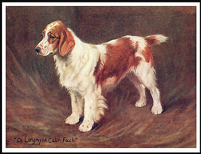 Welsh Springer Spaniel Champion Named Dog Lovely Vintage Style Dog Print Poster