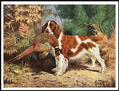 Welsh Springer Spaniel Dog And Pheasant Lovely Dog Print Poster