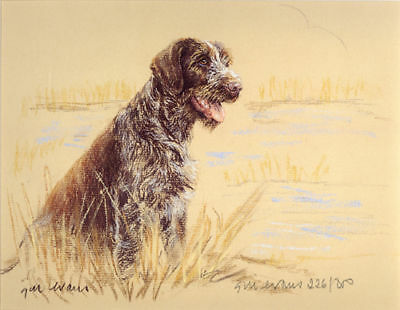 German Wirehaired Pointer Dog Limited Edition Print Gwp