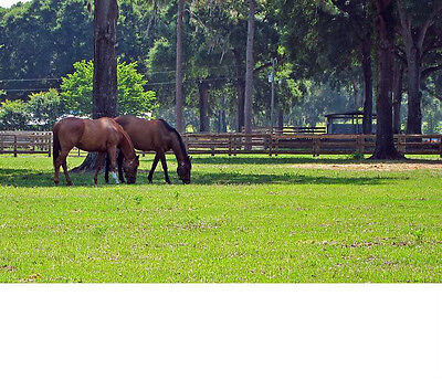 5 + or - ACRES OF LAND / LOT FLORIDA AREA OF FARMS, AND HOMES,ROAD RIGHT OF WAY!