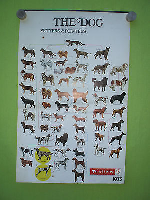 1975 vintage Firestone tires Belgium calendar,the dog setters & pointers hunting