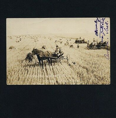 Canada THOMSENS WHEAT FIELD GULL LAKE SASK Harvest * Vintage 10s Real Photo PC