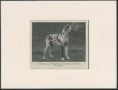Great Dane 1940's Named Champion Dog Print Mounted Ready To Frame