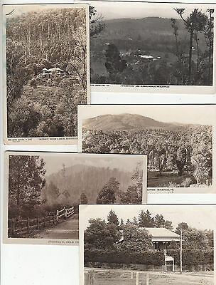 Healesville Victoria Australia group of 5 postcards various scenes 3 Rose type