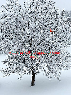 4x6 PHOTO PICTURE WINTER TREE IN SNOW WITH A RED CARDINAL BIRD WALL ART DECOR
