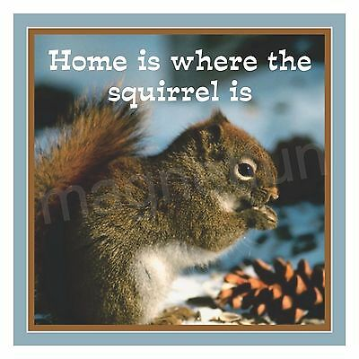 Home is where the Squirrel is Refrigerator Fridge Magnet Eating Nuts