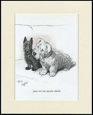 Sealyham And Scottish Terrier Dogs Old 1930's Cecil Aldin Dog Print Mounted