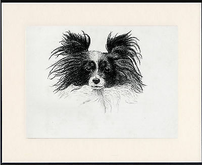 Papillon Old Dog Head Study Print From 1935 Mounted Ready To Frame