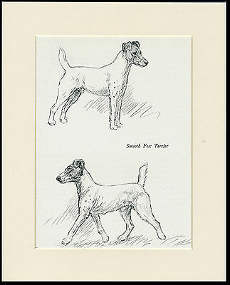SMOOTH FOX TERRIER VINTAGE 1930'S DOG ART PRINT by KF BARKER READY MOUNTED