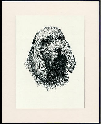 Otterhound Old Dog Head Study Print From 1935 Mounted Ready To Frame