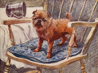 Brussels Griffon Charming Dog Greetings Note Card Cute Dog On Chair