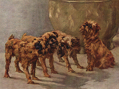 Brussels Griffon Charming Dog Greetings Note Card Beautiful Group Of Four Dogs