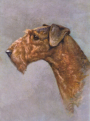 Airedale Terrier Charming Dog Greetings Note Card Head Study