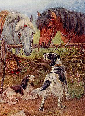 English Setter Charming Dog Greetings Note Card Two Beautiful Dogs And Horses