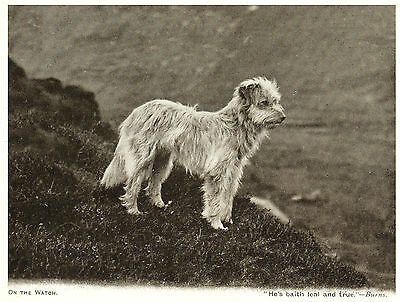 Bearded Collie Old Style Sheepdog On Hillside Dog Greetings Note Card