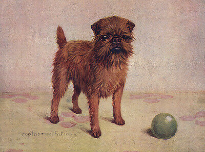 Brussels Griffon Charming Dog Greetings Note Card Beautiful Dog And Ball