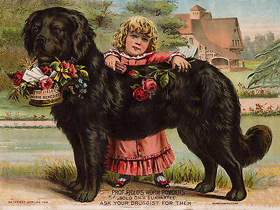 Newfoundland And Little Girl Old Advert On Dog Greetings Note Card