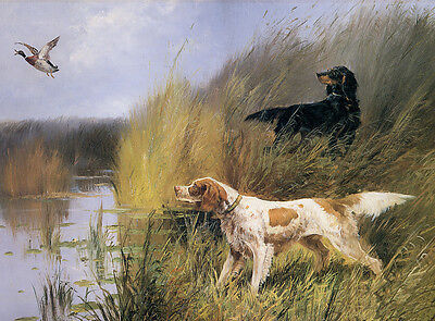 Irish Red And White Setter & Gordon Setter Dog Greetings Note Card Dogs By Water