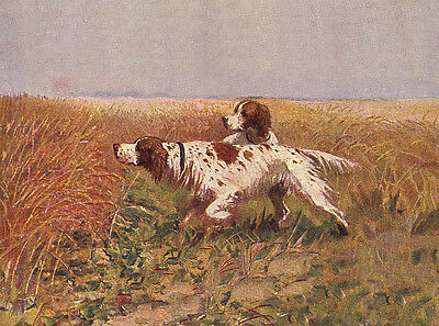 Irish Red And White Setter Dog Greetings Note Card Two Dogs In Field