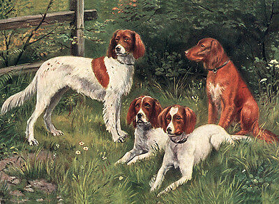 Irish Setter & Irish Red And White Setter Dog Greetings Note Card Four Dogs
