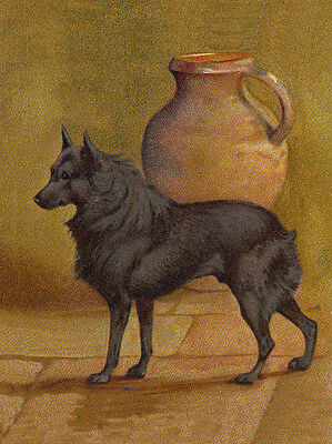 Schipperke Charming Dog Greetings Note Card Lovely Dog Stands By Urn