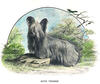 Skye Terrier Charming Dog Greetings Note Card Beautiful Standing Dog