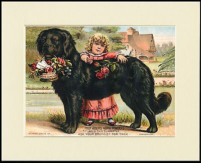 Newfoundland Dog And Little Girl Charming Print Mounted Ready To Frame