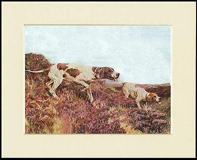 Pointer Dogs At Work On The Moors Lovely Dog Print Mounted Ready To Frame