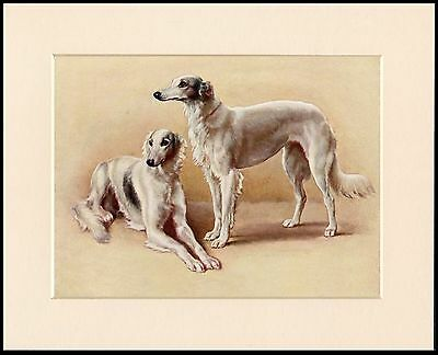 Saluki Two Dogs Charming Little Dog Art Print Mounted Ready To Frame