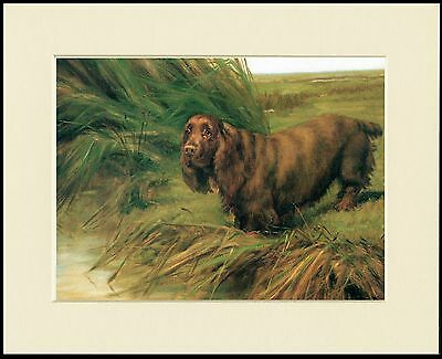 Sussex Spaniel Dog By Water Lovely Print Mounted Ready To Frame