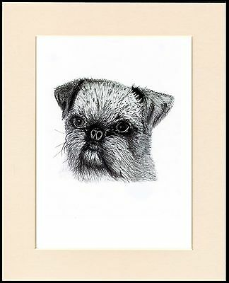 Brussels Griffon Lovely Head Study Sketch Dog Print Mounted Ready To Frame
