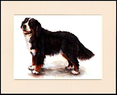 Bernese Mountain Dog Lovely Print Mounted Ready To Frame