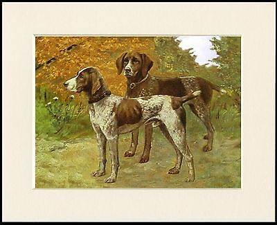 German Shorthaired Pointer Dogs Great Little Dog Print Mounted Ready To Frame