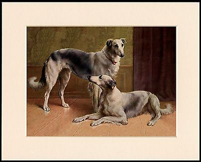 Borzoi Two Old Style Dogs Lovely Dog Art Print Mounted Ready To Frame