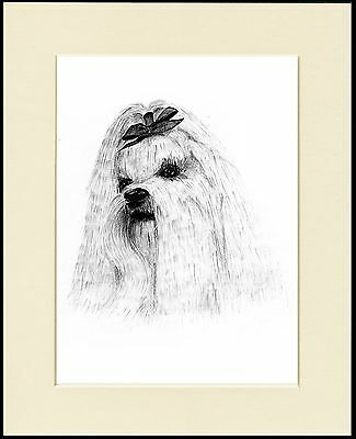 Maltese Dog Head Study Sketch Print Mounted Ready To Frame