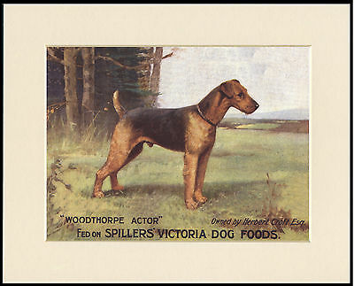 Airedale Terrier Great Spillers Dog Food Advert Print Mounted Ready To Frame