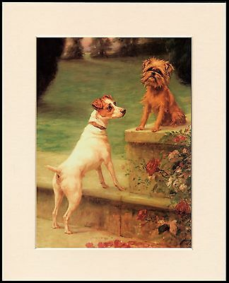 Brussels Griffon And Fox Terrier Lovely Dog Print Mounted Ready To Frame