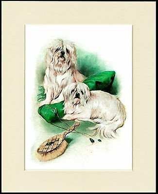 Maltese Two Little Dogs Charming Dog Print Mounted Ready To Frame
