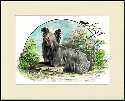 Skye Terrier Lovely Dog Print Mounted Ready To Frame