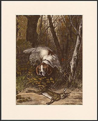 English Irish Red And White Setter Dog And Game Print Mounted Ready To Frame